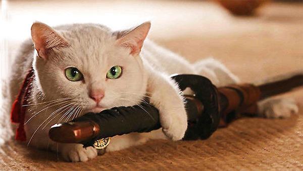 宠物猫训练图片