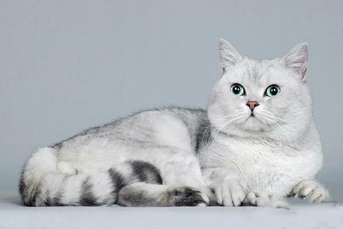 宠物猫训练学校学费图片