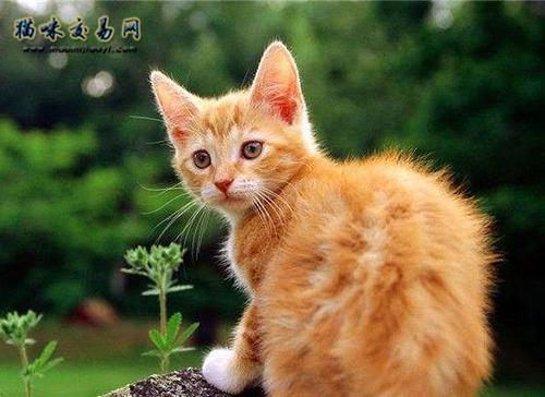 注意:这些品种的猫咪可能会很便宜!