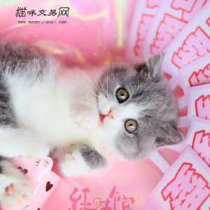 369宠物网_宠物猫价格|宠物猫多少钱|宠物猫图片|视频|猫咪交易信息